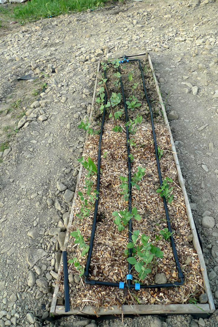 Опыт создания огорода в РП АНДРиКА (5).jpg