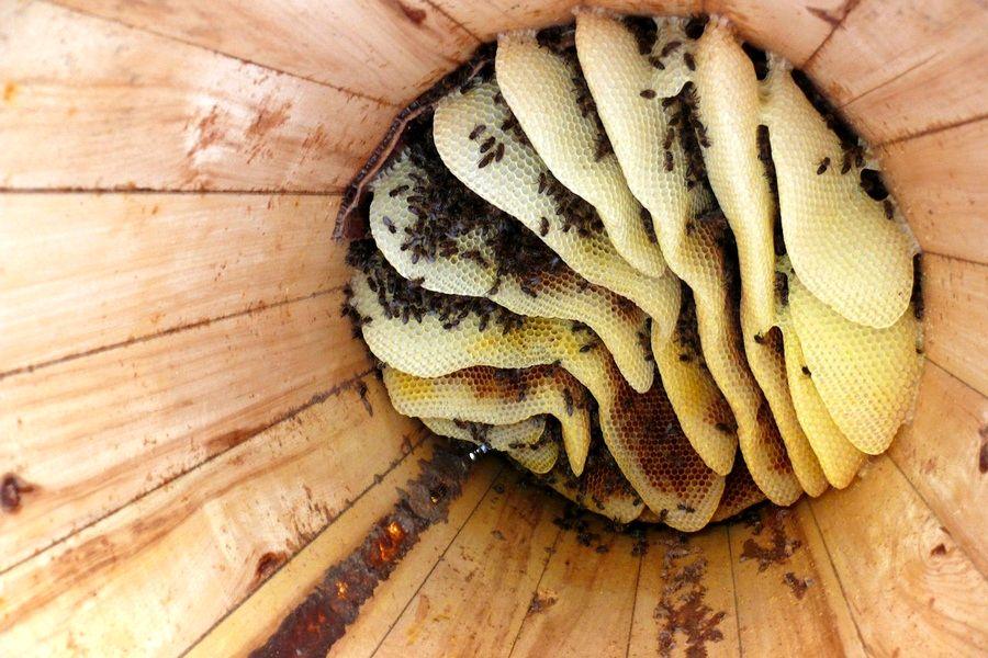 Родовое поместье СВЕТОЗАРНОЕ. Колода для пчёл (3).jpg