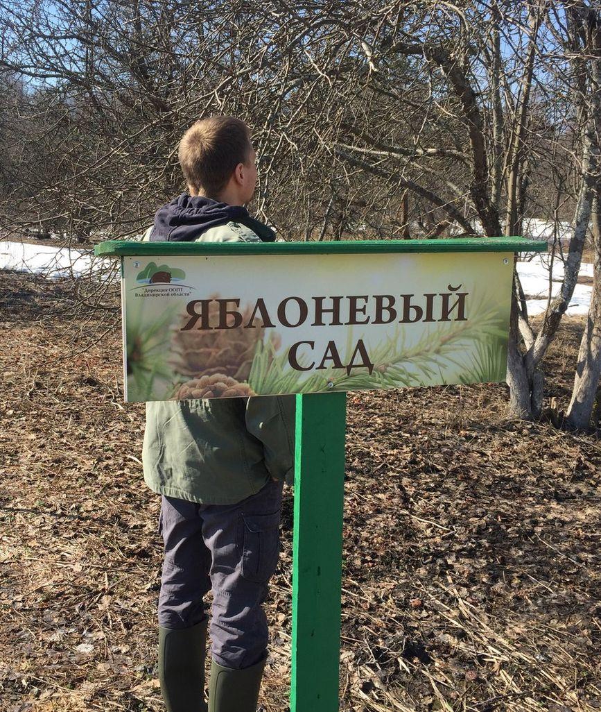 Посадка кедров во Владимирской области (9).jpg