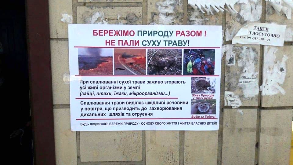 Кедры Украины итоги 2019 (10).jpg