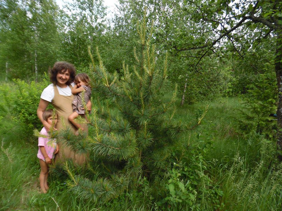 В РП Украины уже плодоносят кедры, выращенные из орешков (6).jpg