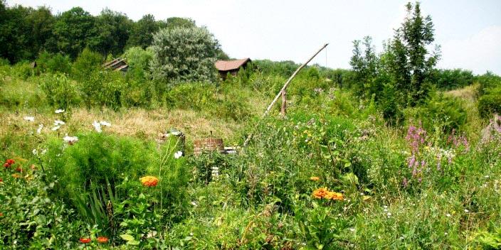 РП Катрук Молдова 4.png