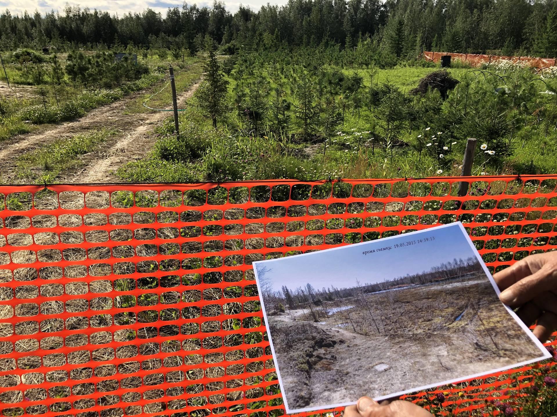 Кедры в тундре (4).jpg