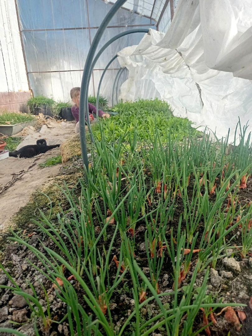 У нас уже весеннее настроение в поместье Тропинка в сад (4).jpg