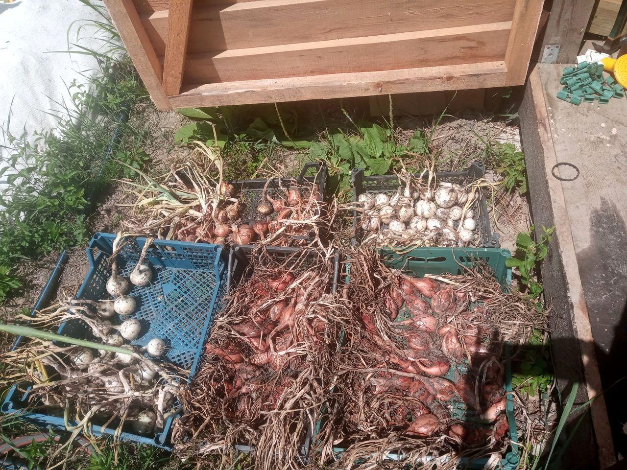 Урожай в поместье АНДРиКА (7).jpg