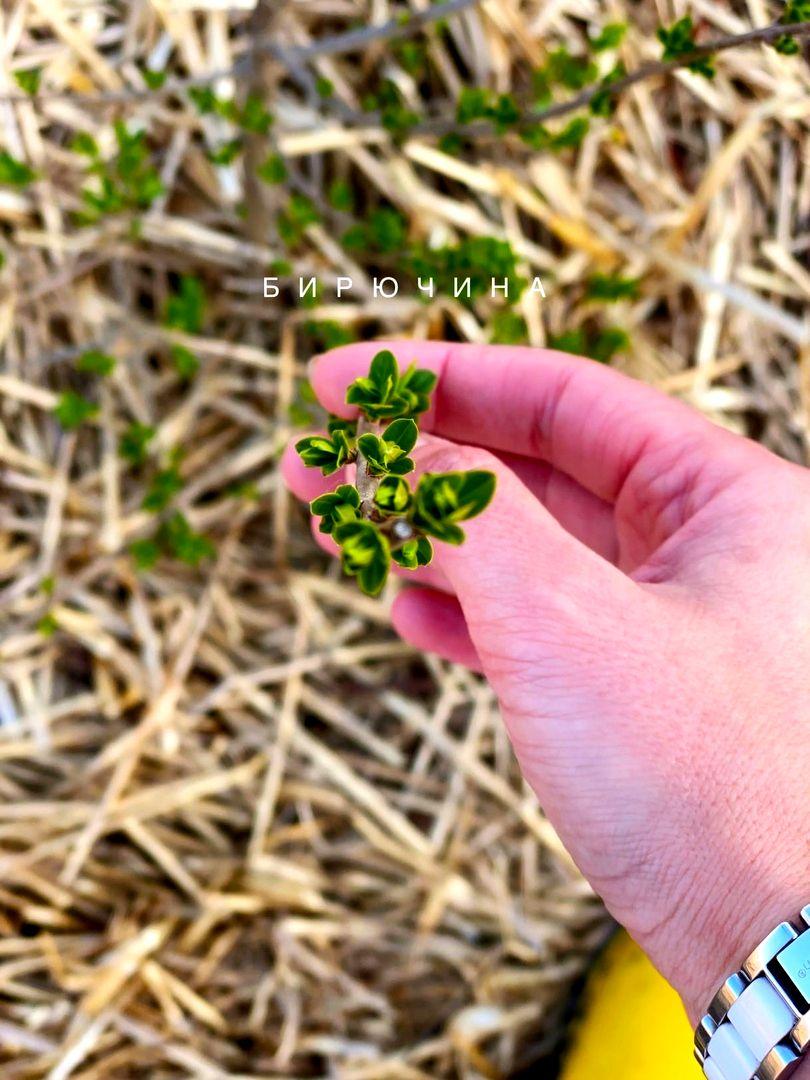 Дарья Нелюбова. Как растения делают нас счастливее (3).jpg