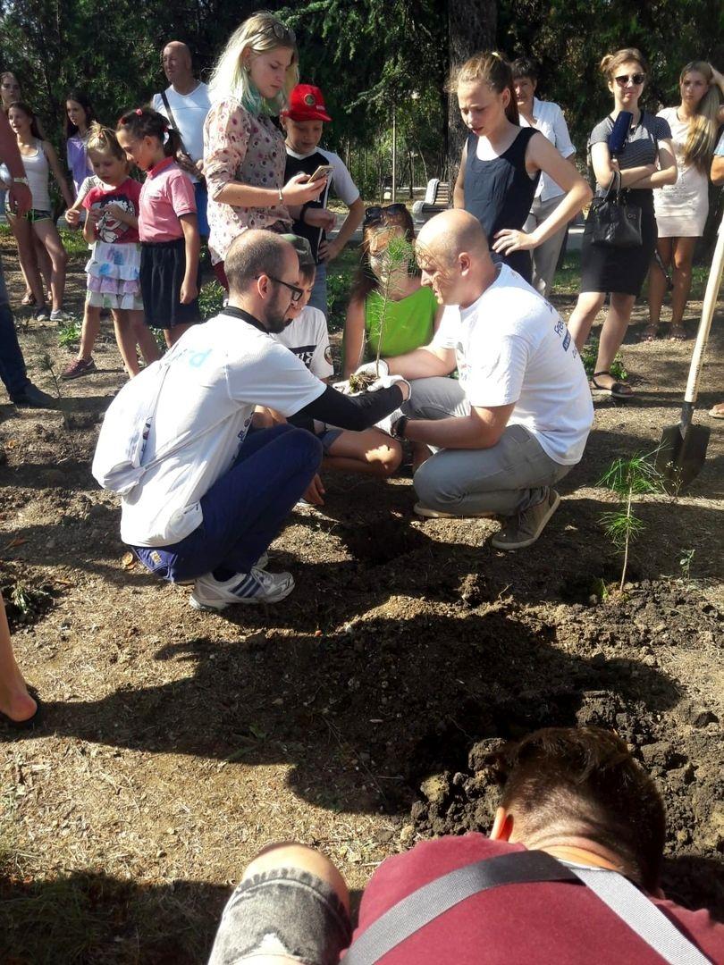 Кедровая роща на Малаховом кургане в Крыму (5).jpg