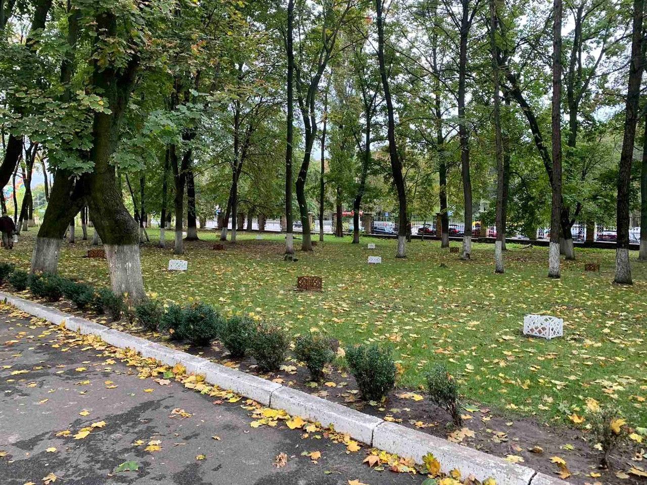 50 сибирских кедров высажено на территории НМУ в Киеве (9).jpg