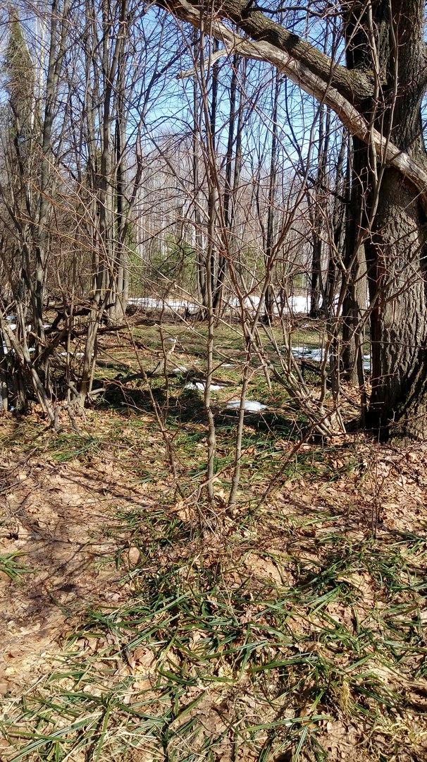 Весна воды в Лесной Поляне (3).jpg