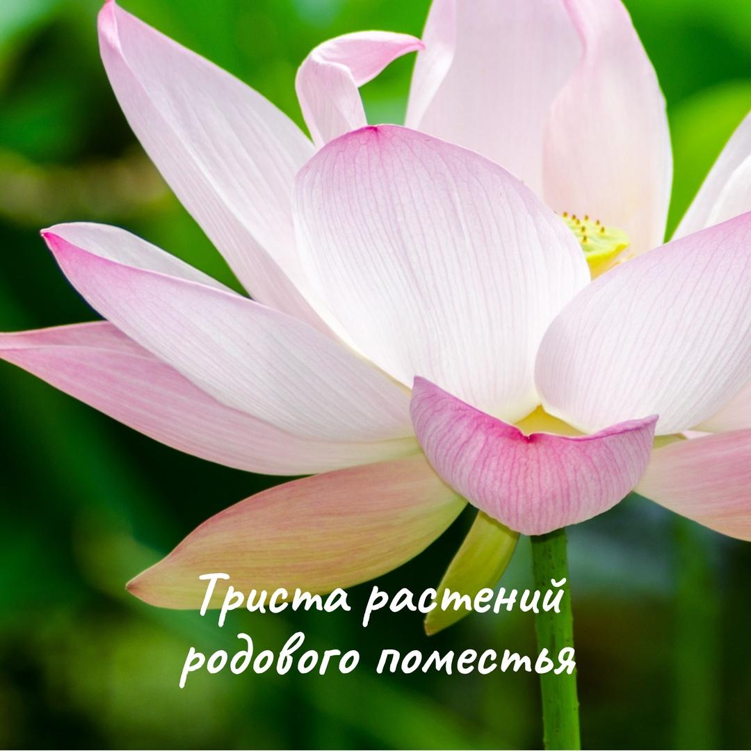 Кристина Яковлева - Обладает ли родовое поместье природным капиталом (3).jpg
