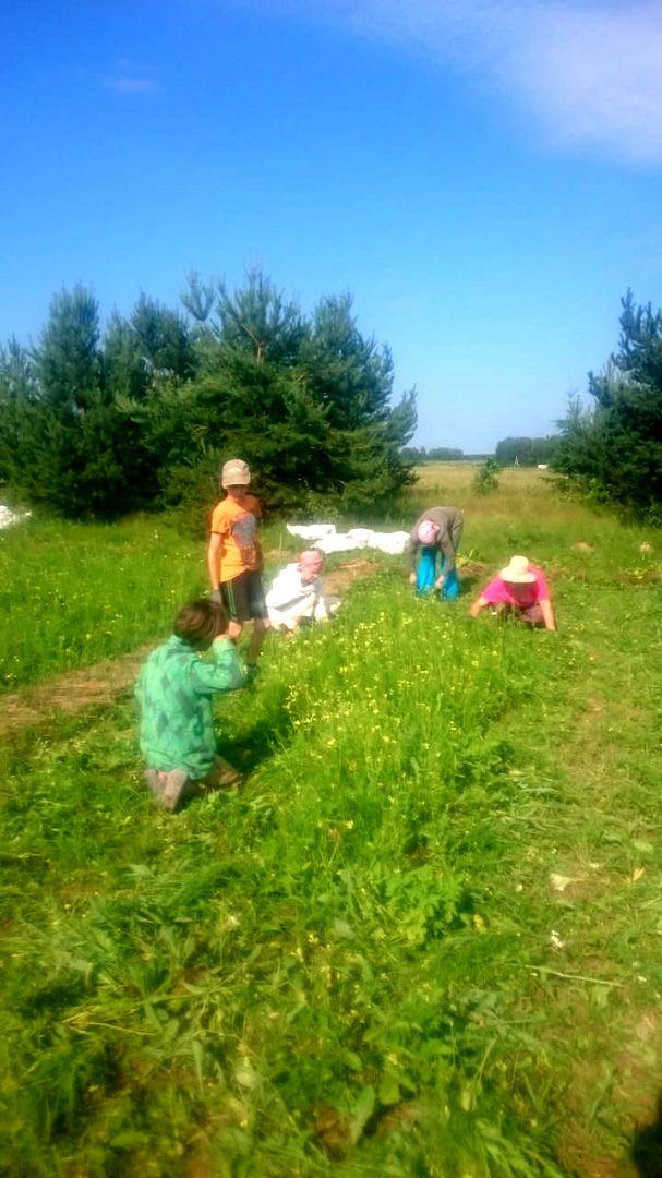 В поселении Ковчег проект Школьный огород (2).jpg