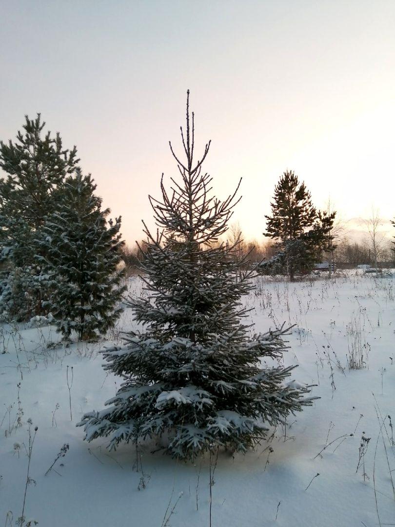 Зимние дни в ПРП Новый Путь (3).jpg