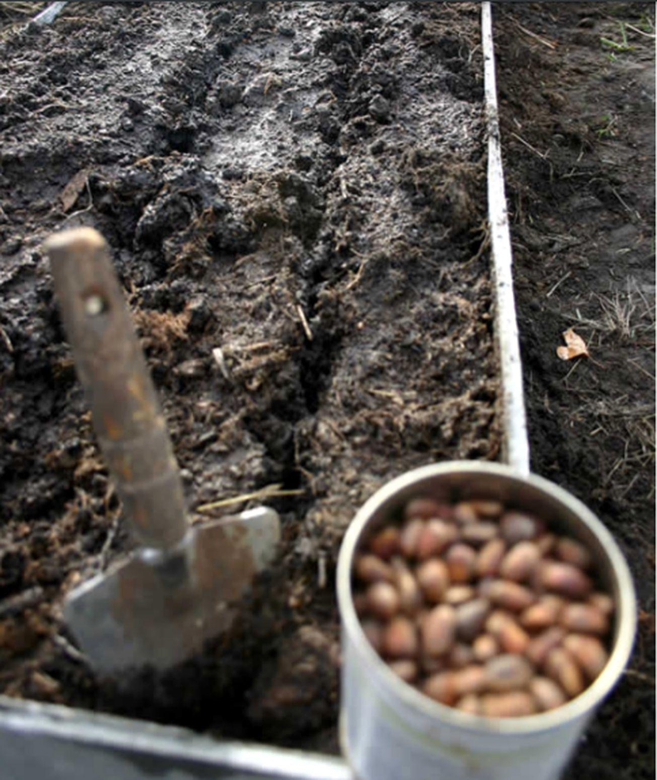 Школка для растений (1).jpg