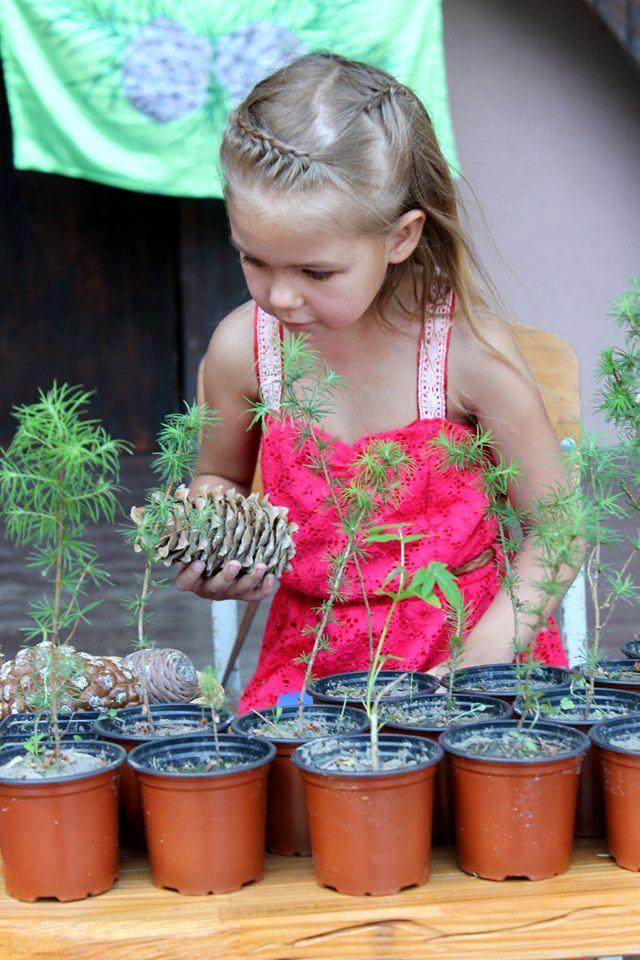 Проект Кедры детям Украины (2).jpg