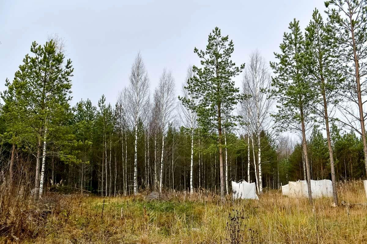 Ближе к природе в Карелии развивается идея родовых поместий (10).jpg