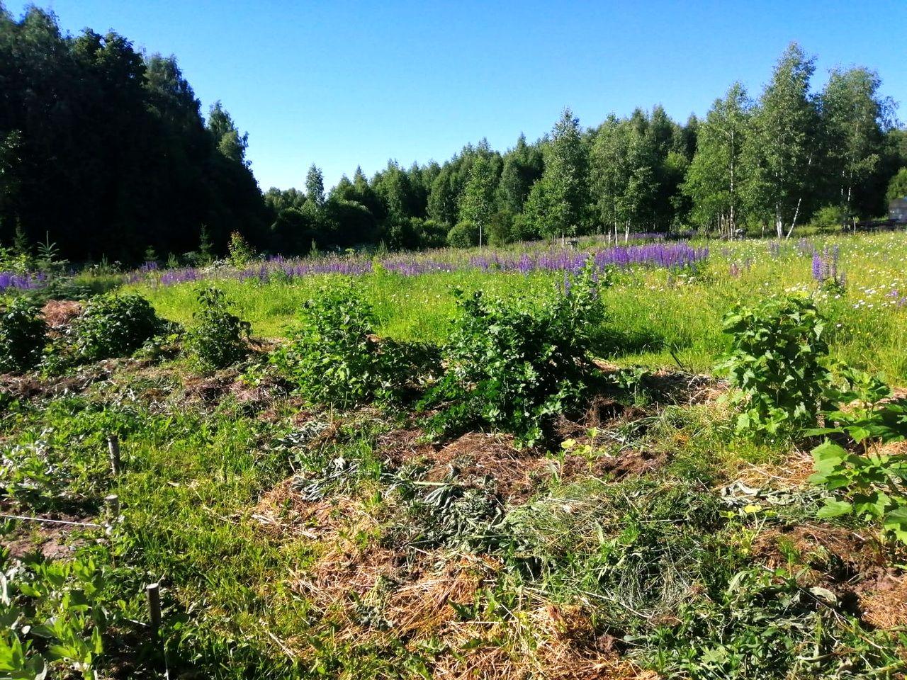 Ягодные кустарники – опыт из РП Лебёдушки (1).jpg