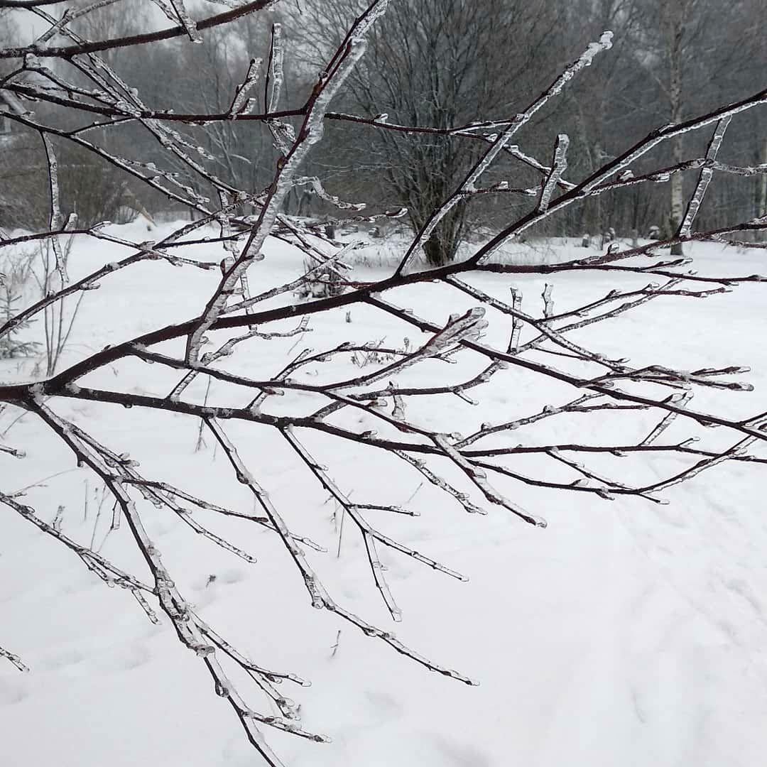 Кристина Яковлева. Серый цвет в поместье (2).jpg
