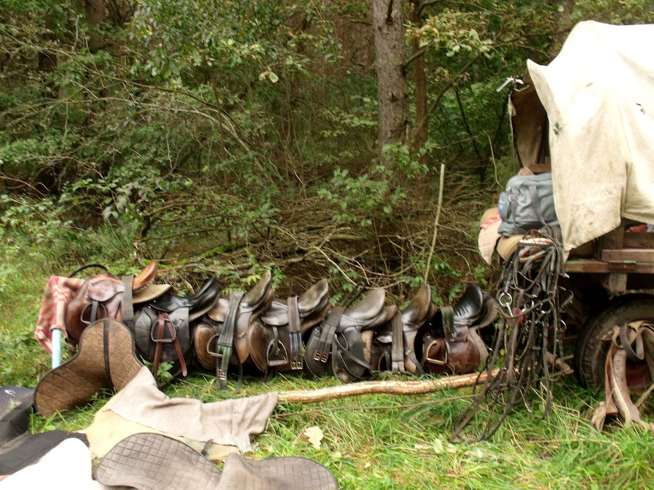 Конный лагерь в ПРП Улесье (2).jpg