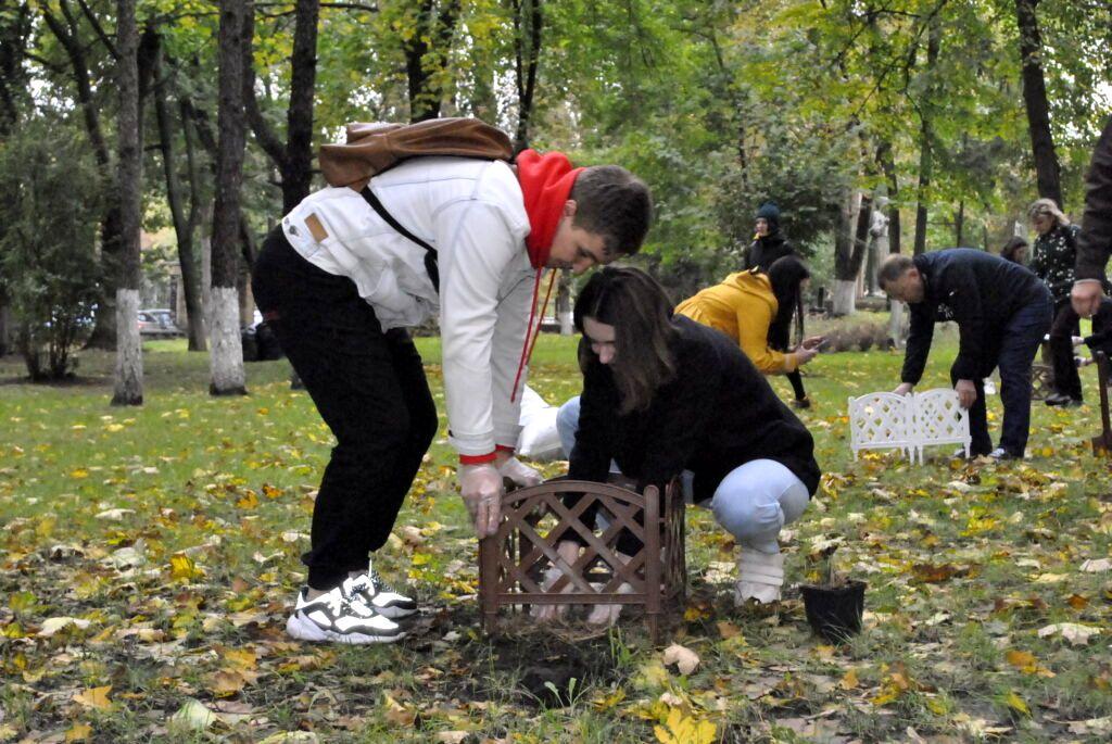 50 сибирских кедров высажено на территории НМУ в Киеве (4).jpg