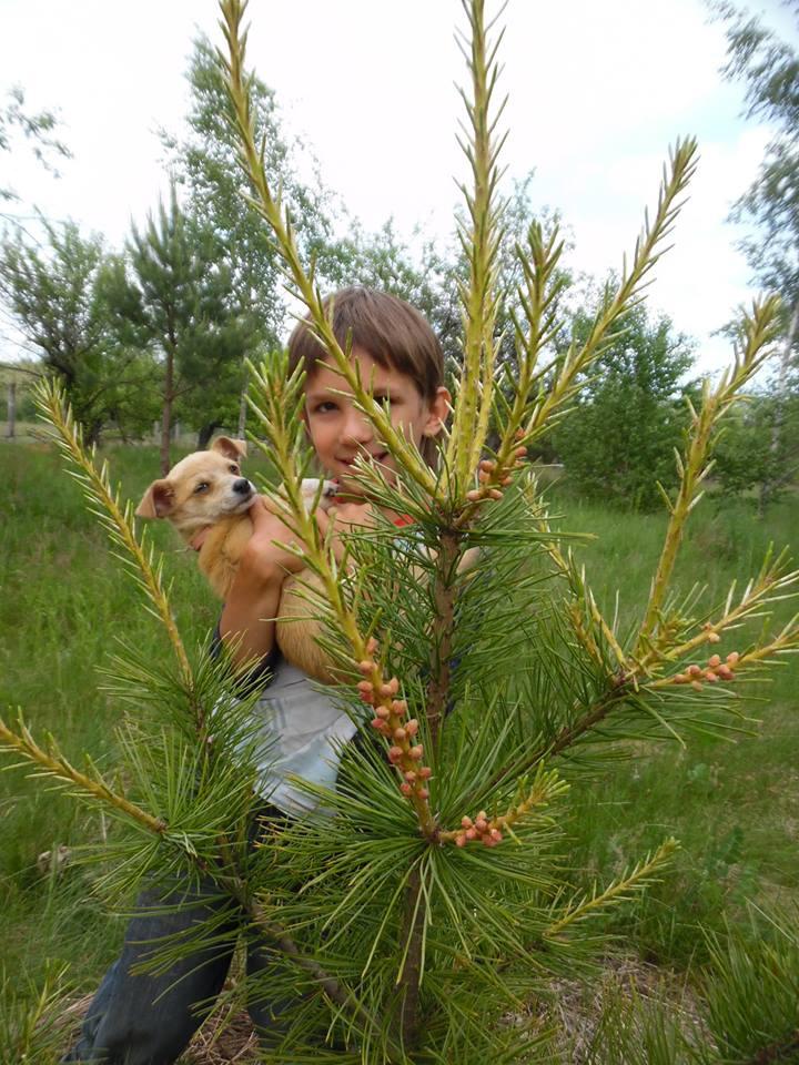 В РП Украины уже плодоносят кедры, выращенные из орешков (4).jpg