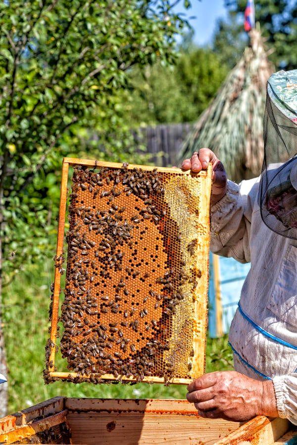Гнездовой мёд в родовом поместье Любое (1).jpg