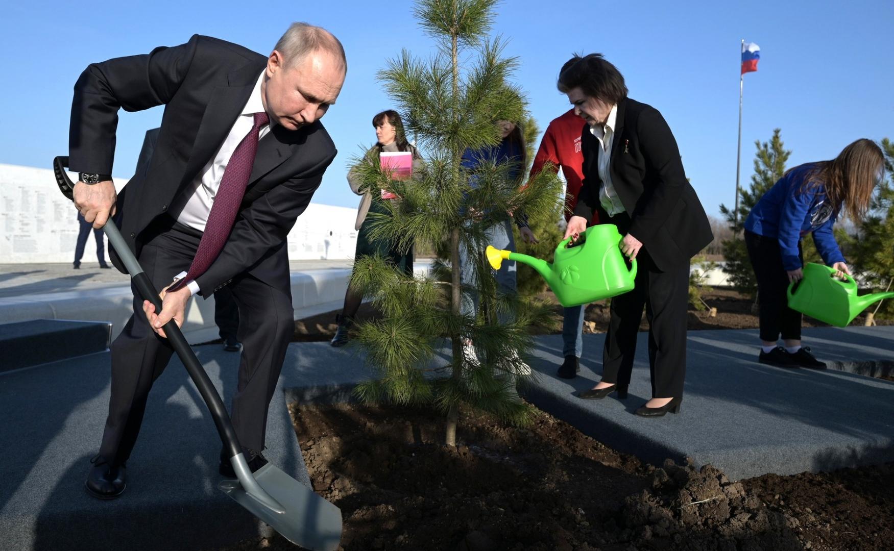 Путин посадил кедр.jpg