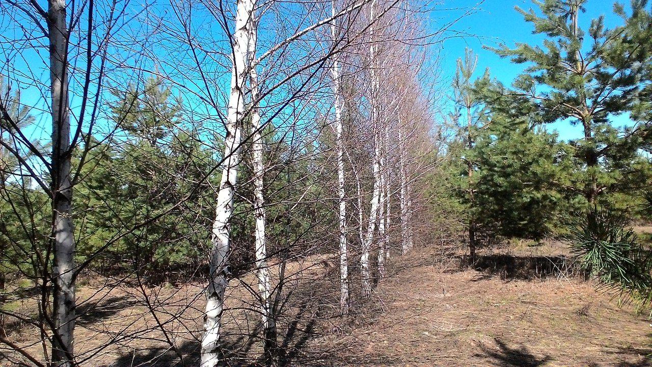Фирзант Рузиев. Как я стал сажать деревья (5).jpg