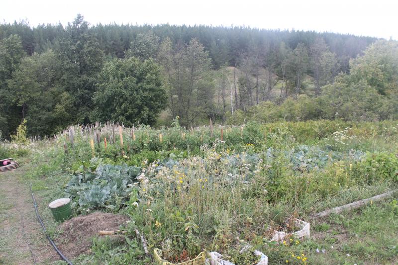 Ульяновцам нужен свой гектар для развития РП (3).jpg