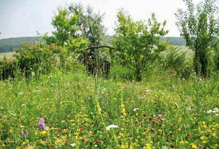 РП Катрук Молдова 2.png
