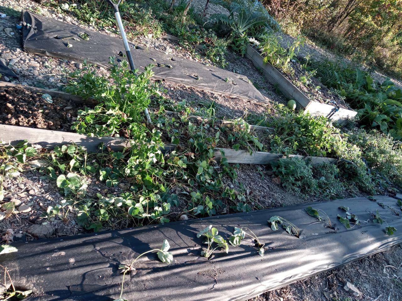 Опыт создания огорода в РП АНДРиКА (10).jpg