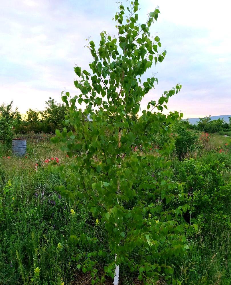 Инна Карман. Создание рая на 1 гектаре (2).jpg