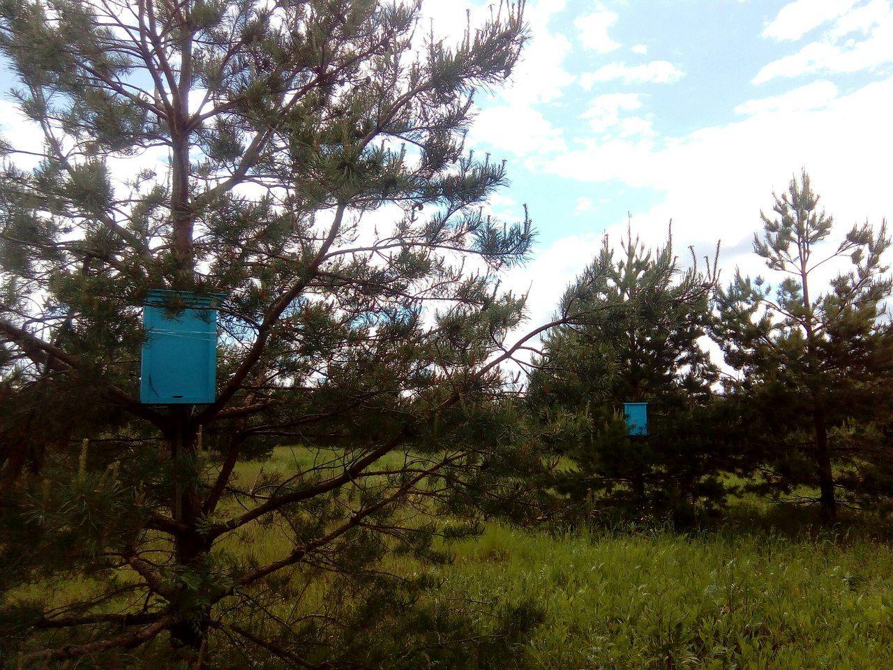 Фирзант Рузиев. Как я стал сажать деревья (2).jpg