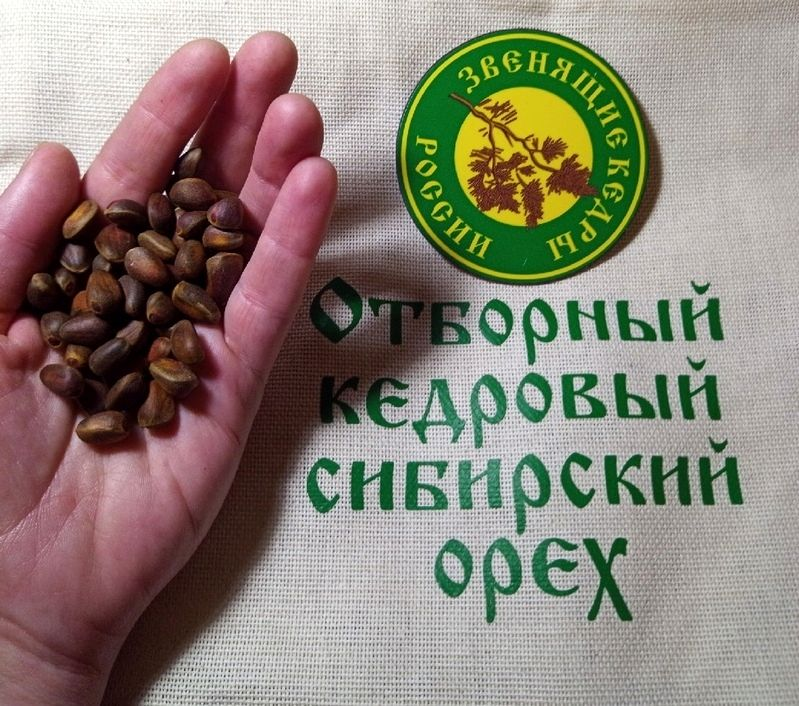 Опыт по выращиванию кедров от ПРП Благодарное (6).jpg