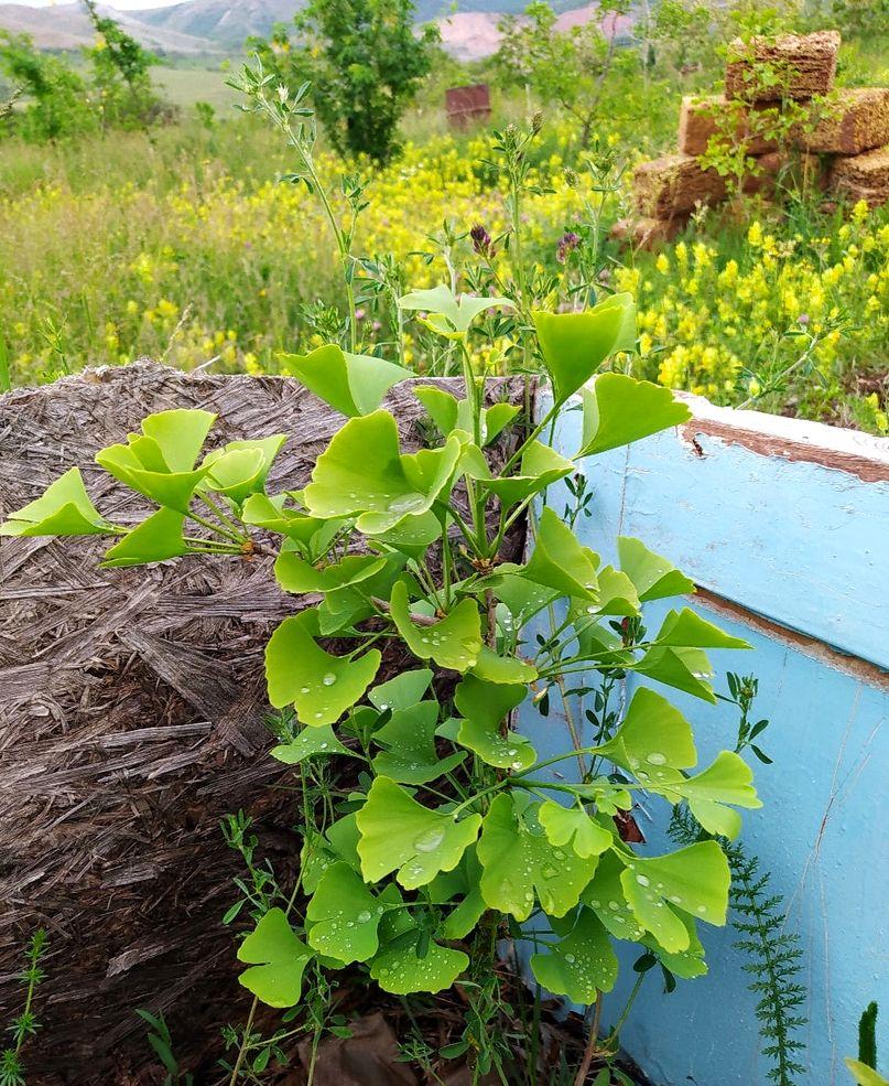 Инна Карман. Создание рая на 1 гектаре (3).jpg
