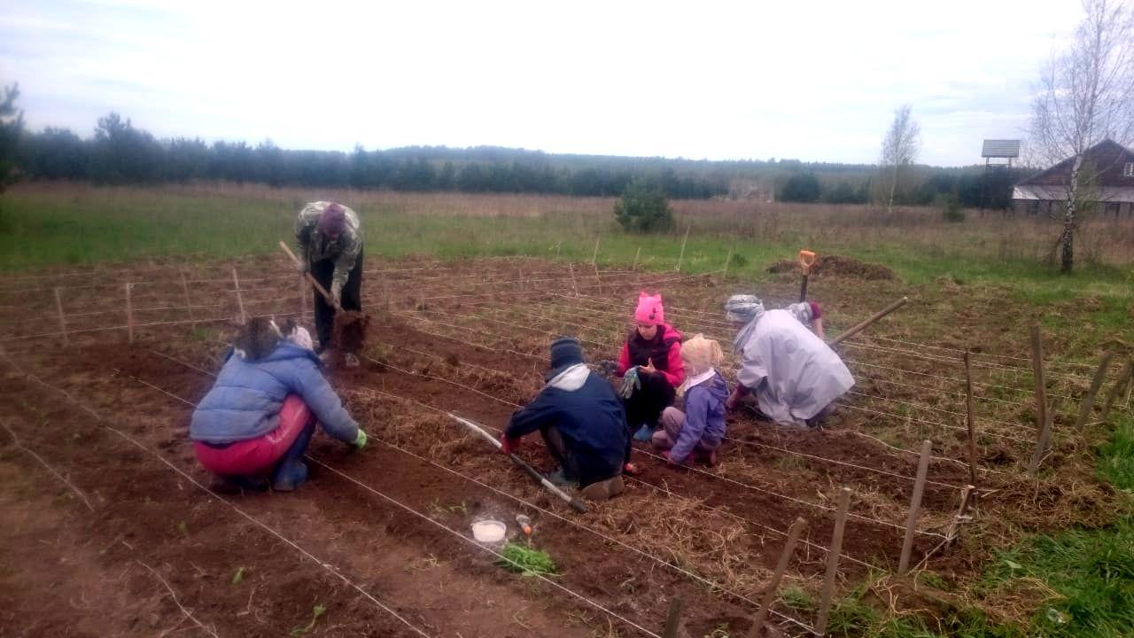 В поселении Ковчег проект Школьный огород (4).jpg