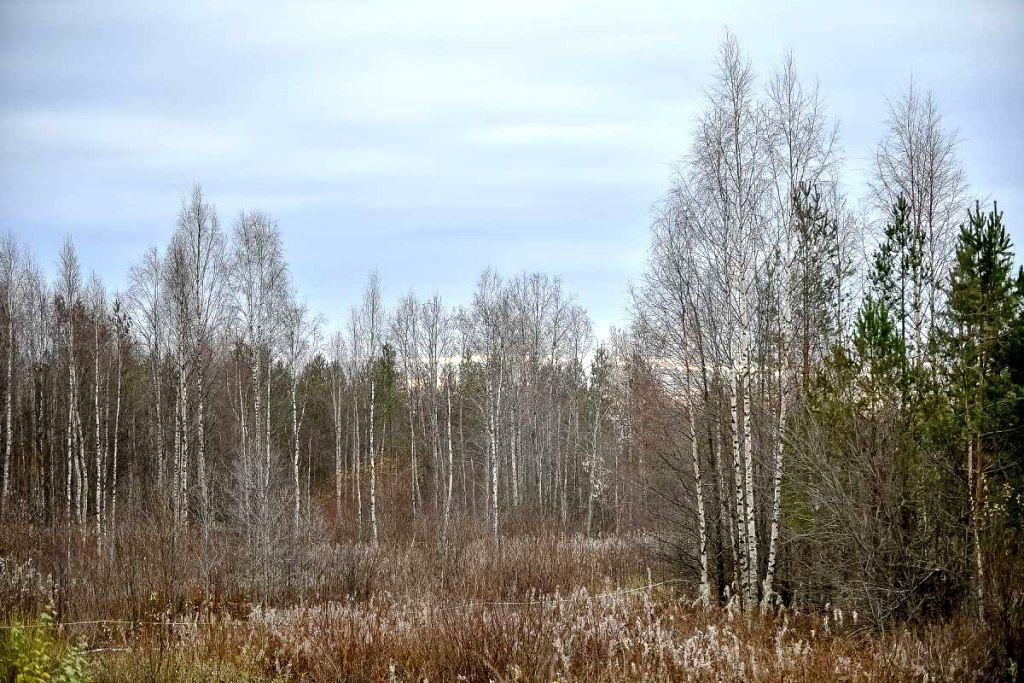 Ближе к природе в Карелии развивается идея родовых поместий (3).jpg
