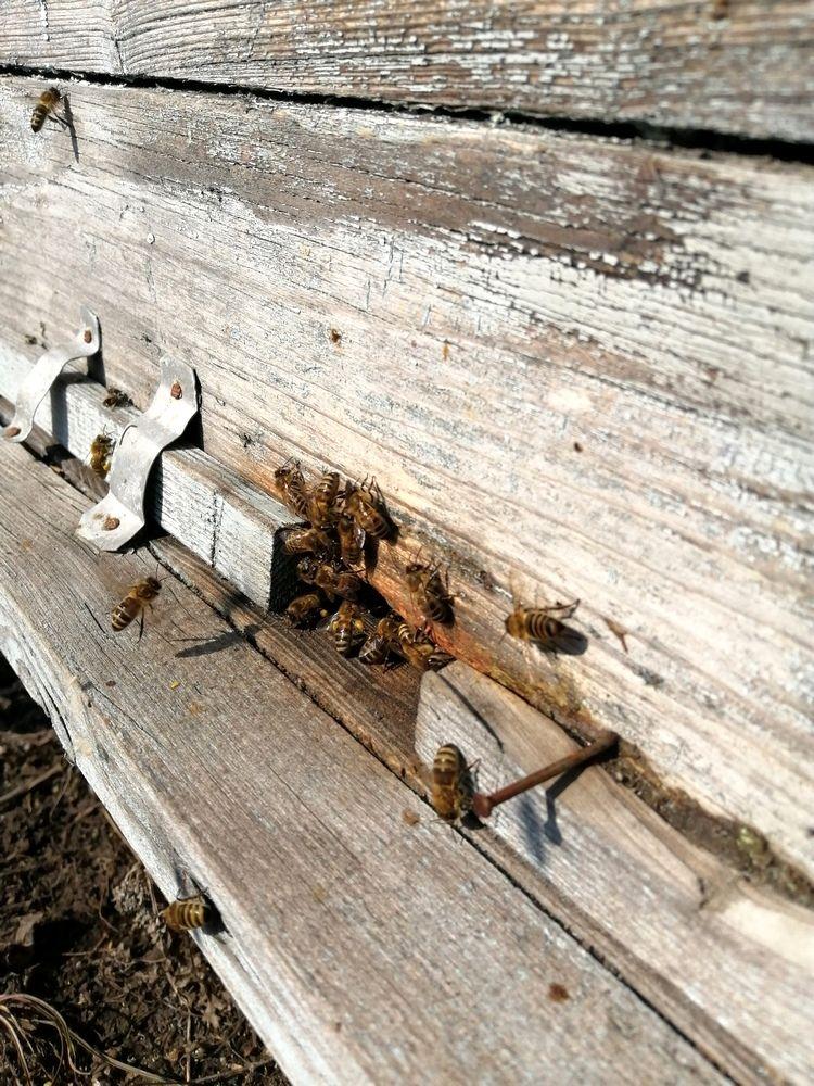 Гнездовой мёд в родовом поместье Любое (2).jpg